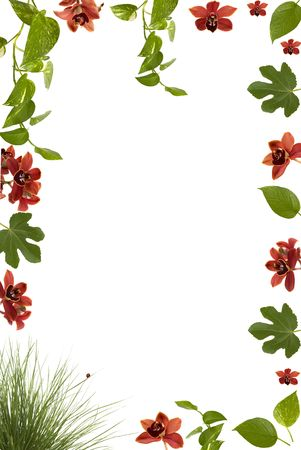 fig leaf: Beautiful floral frame with orchids, lady bug, fig and other plant leaves and grass