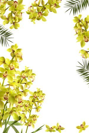 palm frond: Bello e fresco orchidea fronda di palma cornice