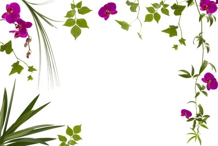 hanging flowers: Beautiful floral frame with different leaves and orchids Stock Photo