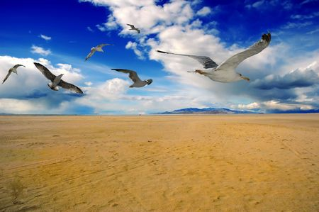 Beach sand and birds photo