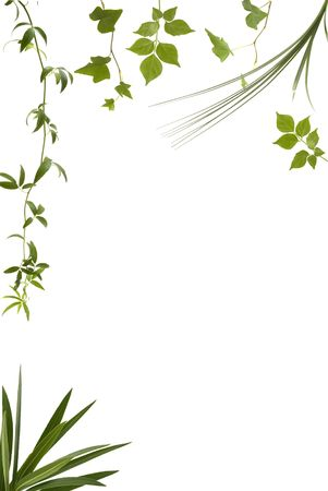 Different kinds of leaves with copy space