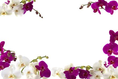 tropical border: Fresh orchid border Stock Photo