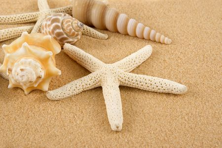 Starfish and seashells on golden sand photo