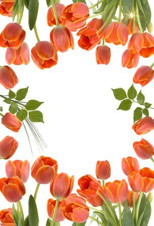 mother'sday:  Tulip border Stock Photo