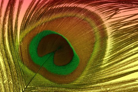 plume de paon: Peacock feather Banque d'images