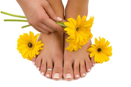 gerbera daisies: Pedicured pies, manicured parte, y margaritas gerbera