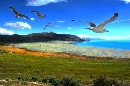salt water: Great Salt Lake in Utah              Stock Photo