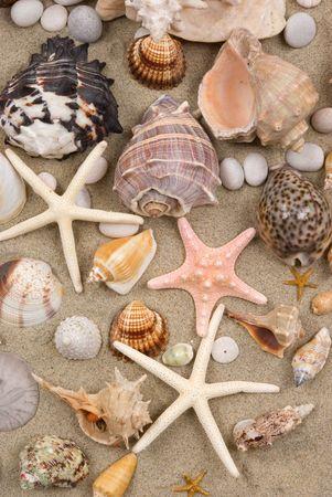 Seashell background photo