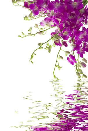 A bouquet of fresh orchids with water reflection Stock Photo