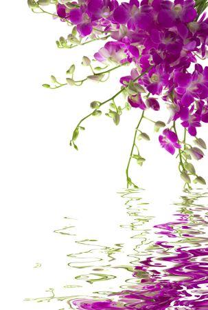 orchids: Un bouquet di orchidee fresco con la riflessione di acqua Archivio Fotografico