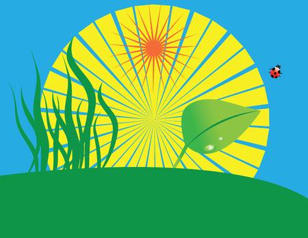 Grass, leaf, lady bug and sun(vector) Vector