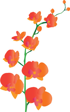 vector flowers: Beautiful orange orchid