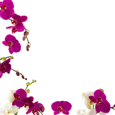 tropical border: Fresh orchid border Stock Photo