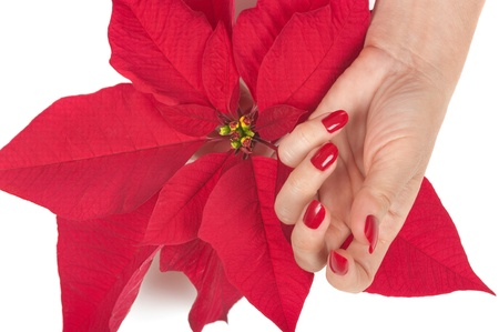 salon and spa: Christmas spa with manicured hands