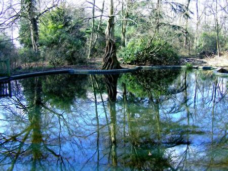 bole: Nature image with reflection of trees in a lake Stock Photo