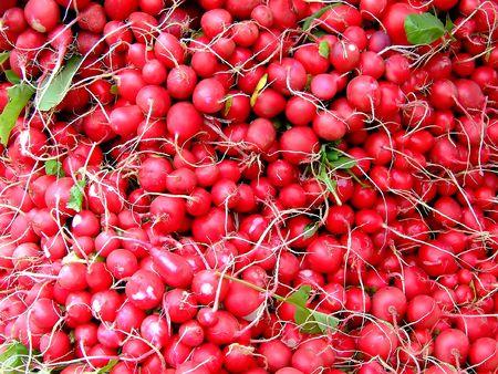 Big pile of red radishes photo