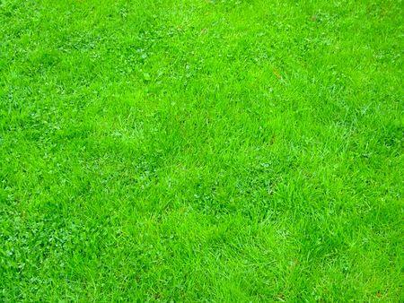 regular: Texture di regolare l'erba in un campo Archivio Fotografico