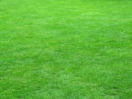 sward: Quality football grass field