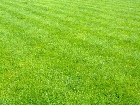 scythe: New football grass with lines of scythe
