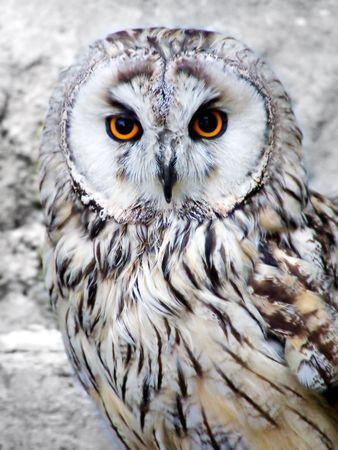 beak vulture: Wild owl with orange eyes closeup