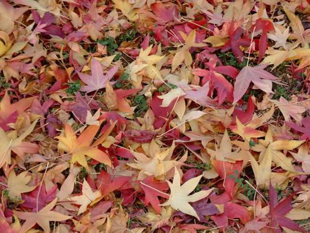 A lot of leafs in autumn colors photo