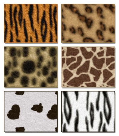Six wild African animal skin texture collections photo