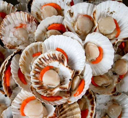 A bunch of delicious sea shells prepare for eat Stock Photo - 811961