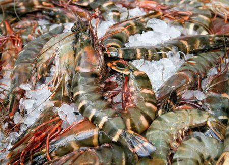 Big fresh tiger prawns on the market photo