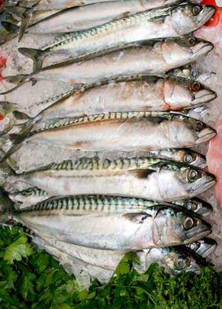 mackerel: Blue fresh mackerel fish on the market Stock Photo