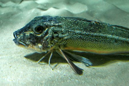 Under water macro shot of small fish Stock Photo - 850059