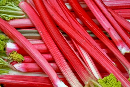 A bunch of fresh organic red rhubarb photo
