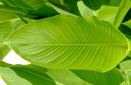 Green leaf natural background decoration in lines
