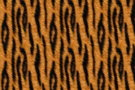 leather coat: Wild tiger skin real pattern texture background