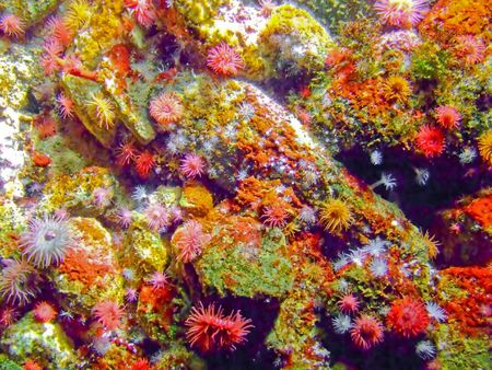 Colorful underwater sea coral reef with a lot of polyps photo