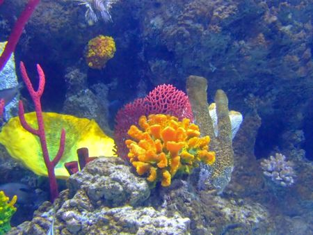 Underwater sun and purple coral with colorful wildlife photo
