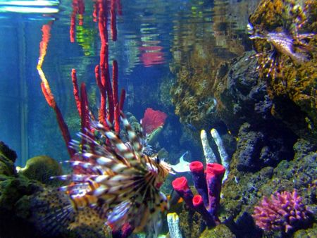 Scary fish on the colourful coral reef Stock Photo - 1092884