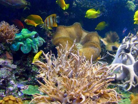Tropical fishes in the beautiful coral reef Stock Photo - 1092885