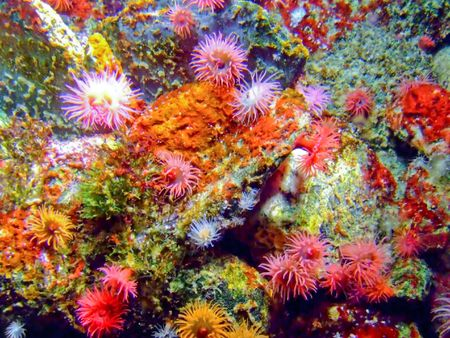 rock bottom: Colorful underwater sea coral reef with a lot of polyps Stock Photo