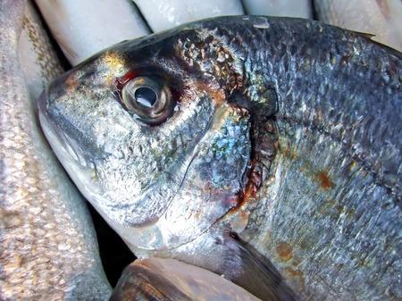 Big blue fresh fish food from sea Stock Photo - 1413729