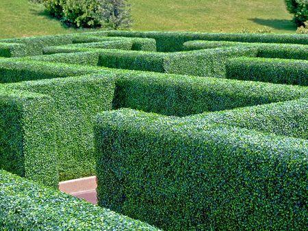 enigma: Big maze pattern labyrinth in green garden