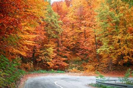 Rural road in the big autumn wood photo