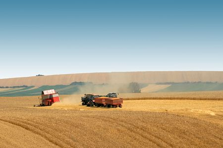 Wheat harvest in the big agricultural field photo