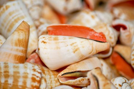 Bunch of small sea shells for decoration Stock Photo - 2096241