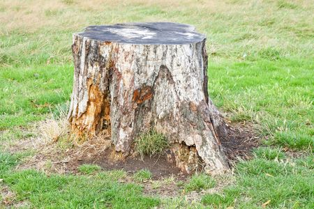 remains: One old tree stump in green field