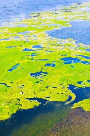contaminated: Very bad contaminated and polluted lake water