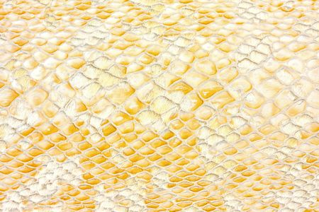 Snake texture with detailed beige reptile pattern photo