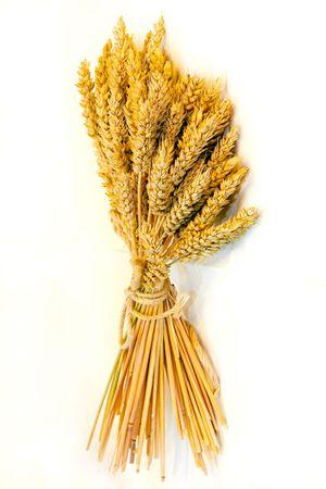 Close up shot of fresh wheat beam