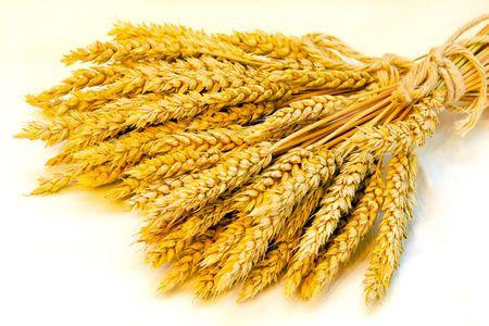 sheaf: Close up shot of fresh wheat beam