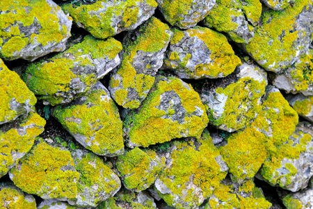 Very old stone wall covered with moss  photo
