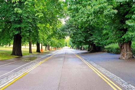 timberland: Beautiful road trough wood in Greenwich London Stock Photo
